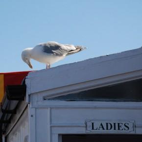Un día en Brighton (Segunda Parte)