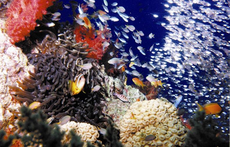Fondos marinos de Aqaba. Jordania © The Jordan Tourism Board