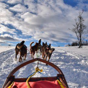 Trineo de perros en la Laponia noruega. Créeme, tienes que vivirlo