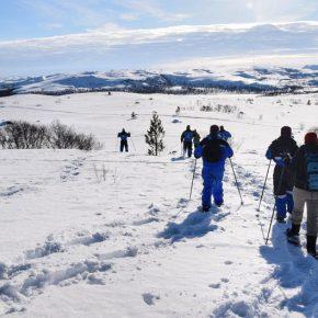 Motos de nieve, raquetas y trineo de perros: aventuras invernales en la Laponia noruega