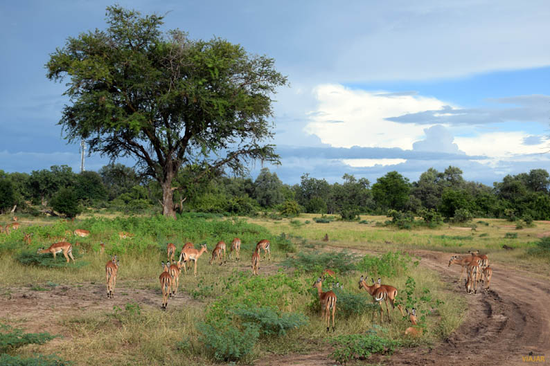 South Luangwa National Park. Zambia