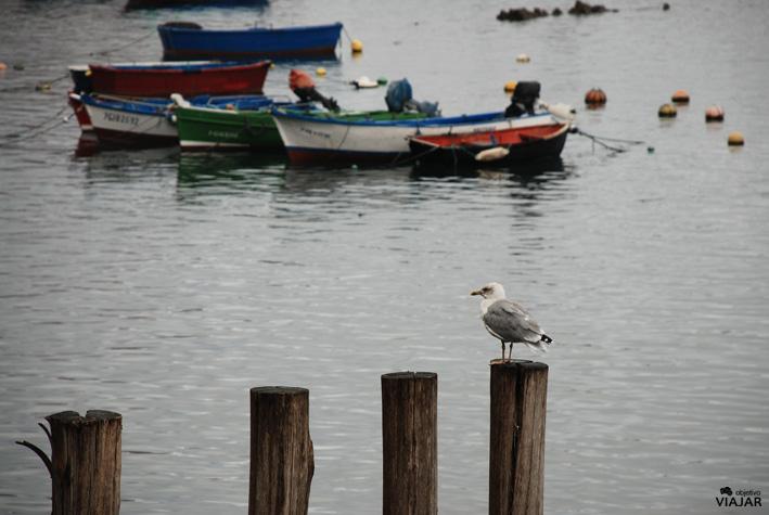Puerto de Cudillero. Asturas
