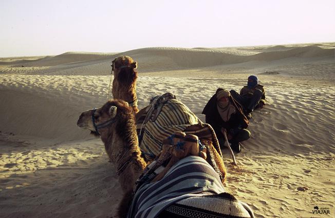 Dunas, camellos y guías en el Gran Erg Oriental del Sáhara. Túnez