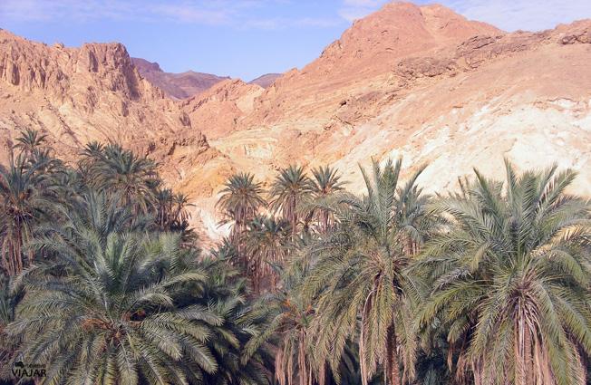 Paisaje del oasis de Chebika. Túnez