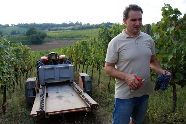 Una tarde de vendimia en los viñedos de Altavita