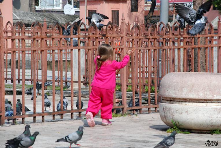 Jugando con las palomas. Estambul