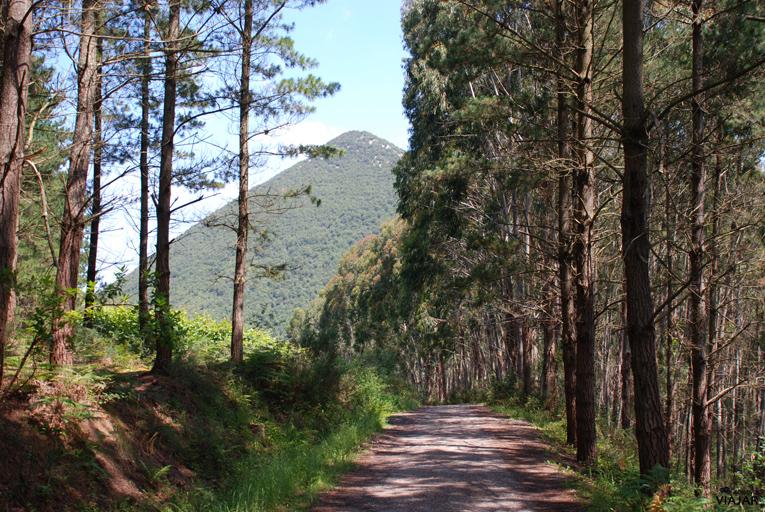 Primeros metros de la pista forestal. Bosque de Oma