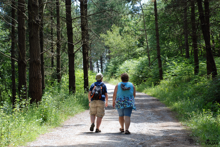 Viajeras en ruta. Bosque de Oma