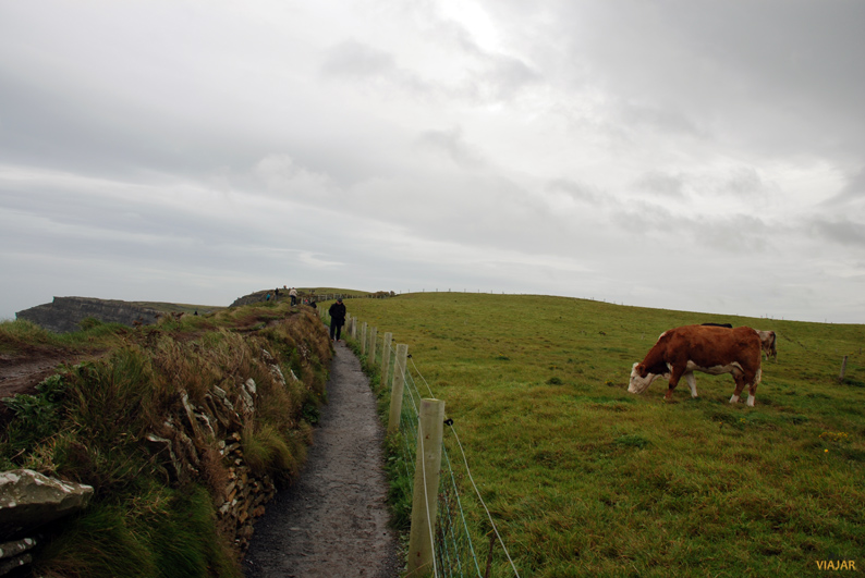 Verdes prados frente al Atlantico. Acantilados de Moher