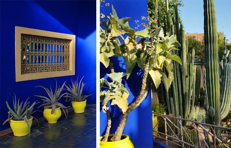 Azul Majorelle. Jardín Majorelle. Marrakech