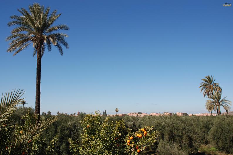 Jardines de la Menara. Marrakech