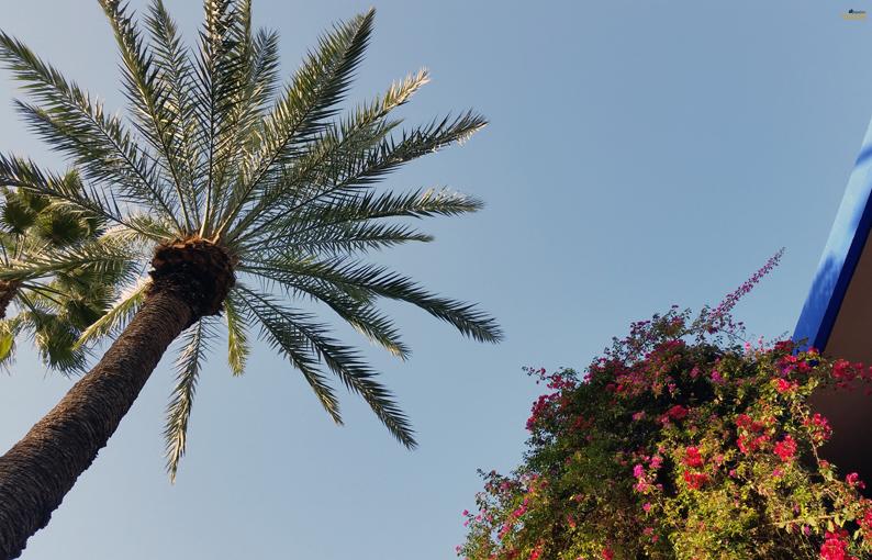 Los colores del Jardín Majorelle. Marrakech