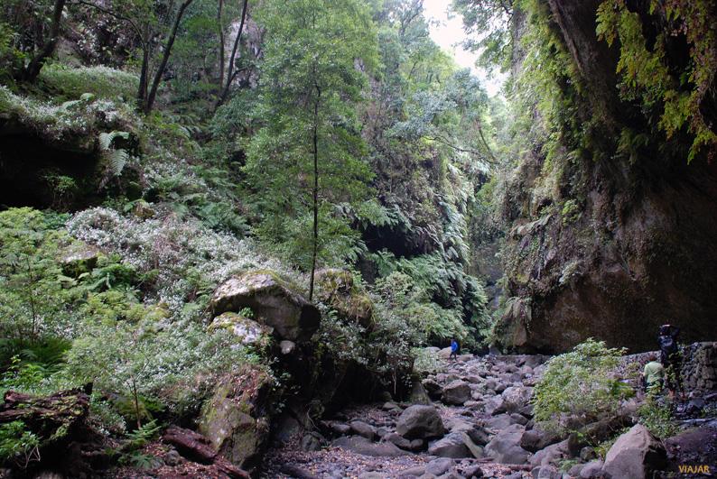 Bosque de Los Tilos. La Palma