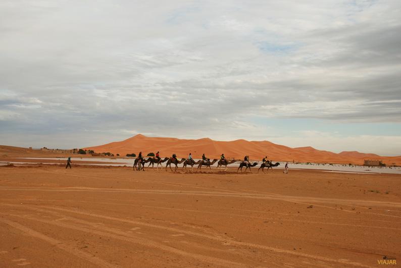 Caravana de dromedarios en Erg Chebbi