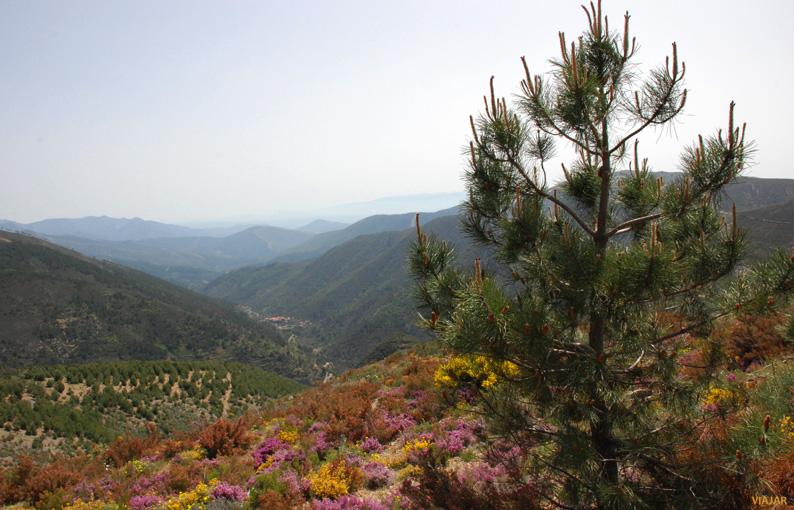 Valle del río Marvellido