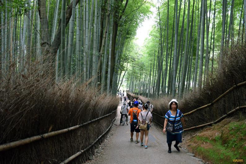 Bosque de bambú de Arashiyama, Kioto