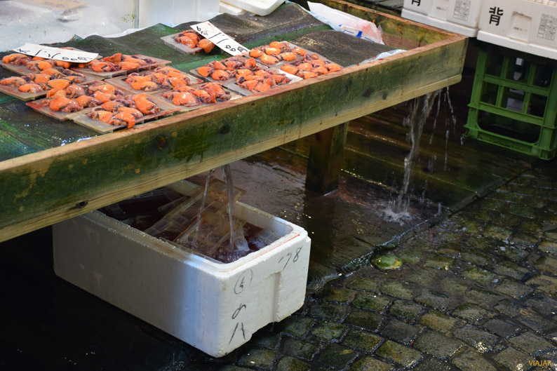 Suelo resbaladizo. Mercado Tsukiji