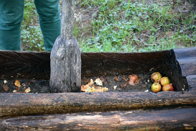 Triturando las manzanas. Manzanal de Sagardoetxea. Territorio de la Sidra