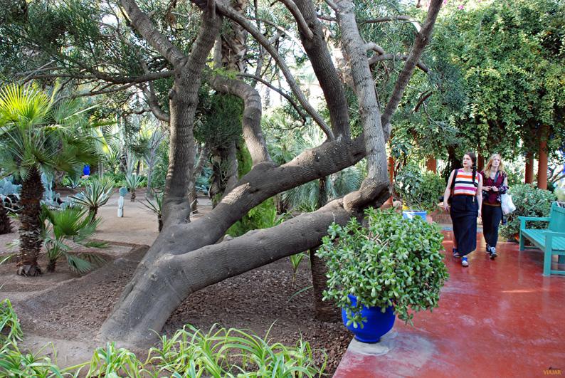 Jardín Majorelle. Qué ver en Marrakech
