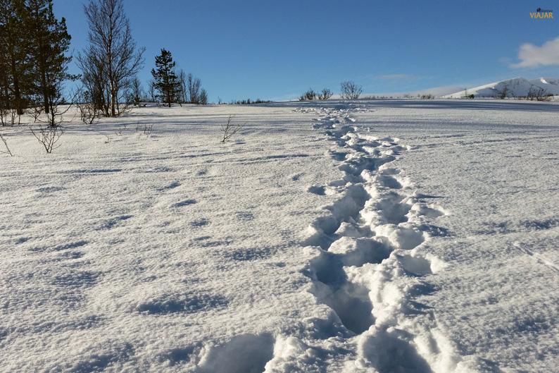 Caminos sin trillar. Laponia noruega