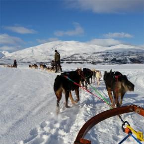 10 razones para viajar a la Laponia noruega y desear volver