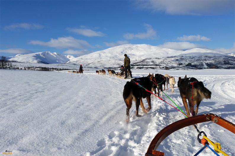 Trineo tirado por perros. Laponia noruega