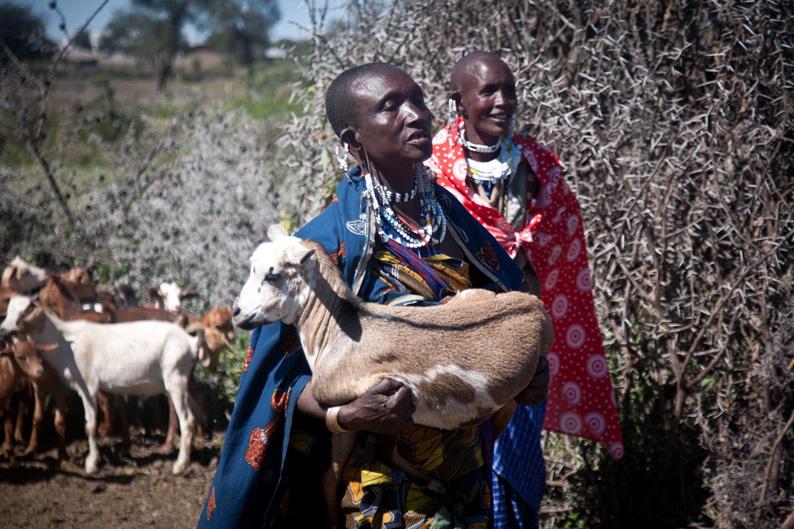 Cabras que cambian la vida de las viudas maasai en Tanzania