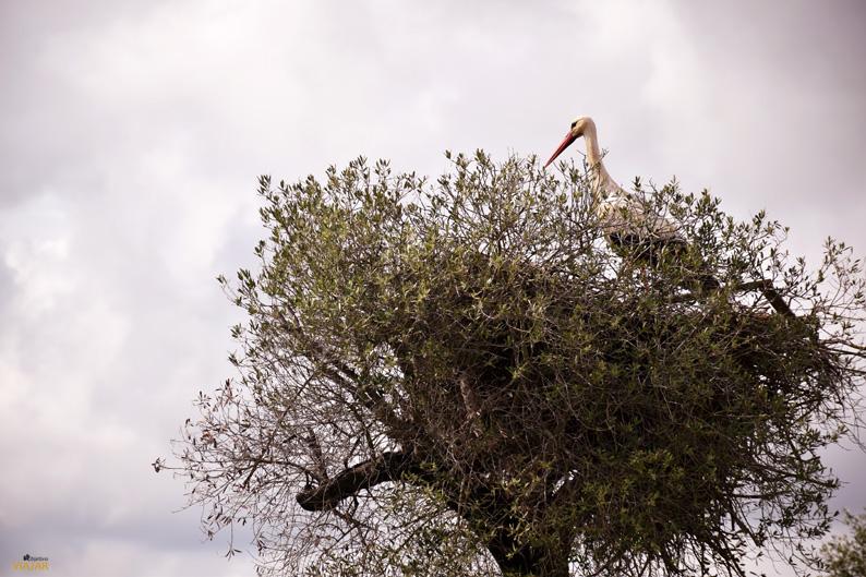 Avistamiento de aves en La Dehesa de Abajo. Provincia de Sevilla