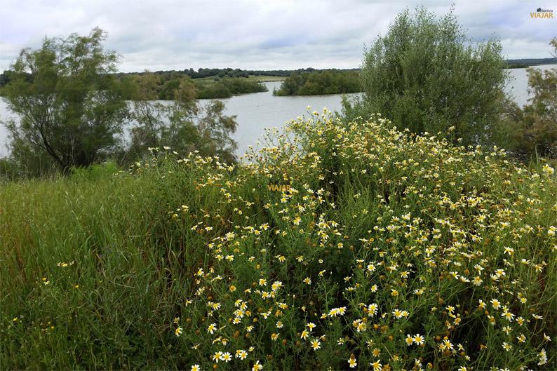 Laguna en la Dehesa de Abajo. Provincia de Sevilla