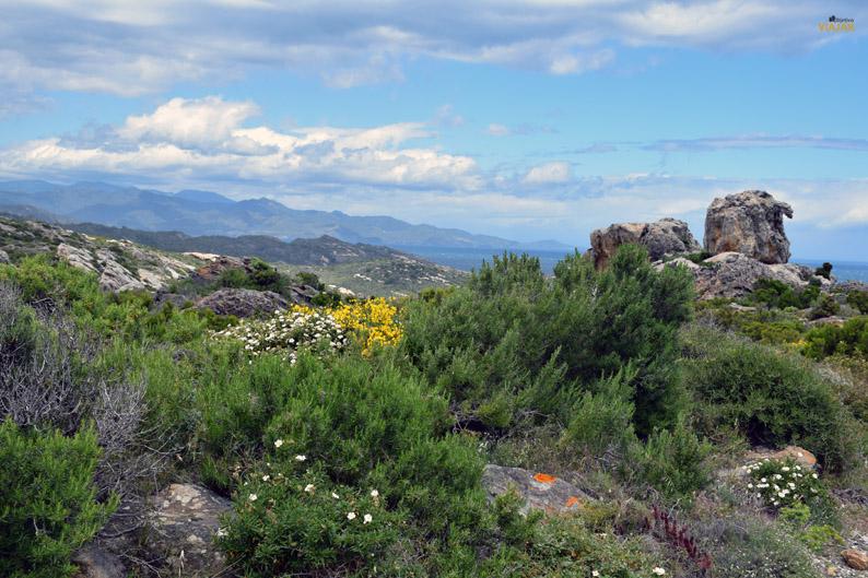 Es Camell del pla de Tudela. Parque Natural de Cap de Creus