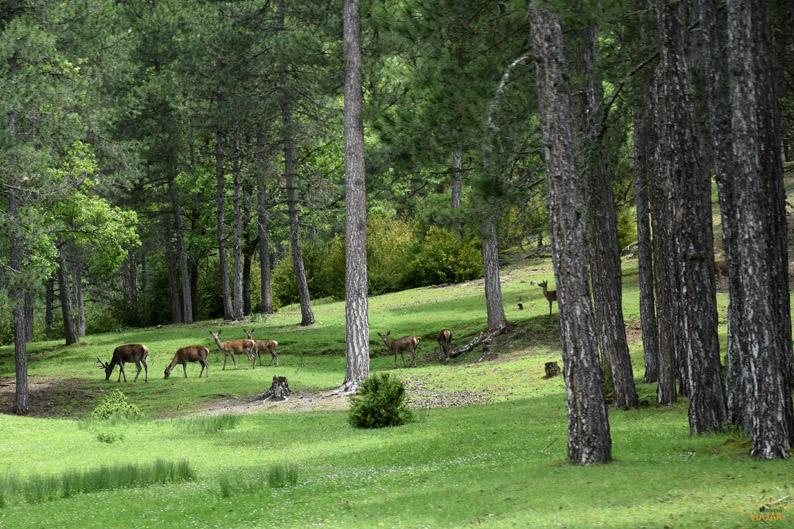 Parque El Hosquillo. Provincia de Cuenca