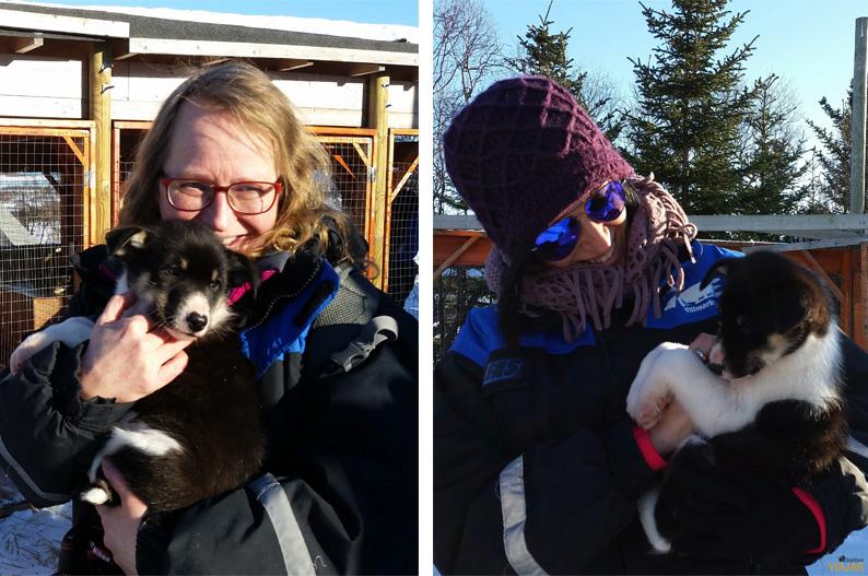 Jugando con los cachorros. Trineo de perros. Laponia noruega
