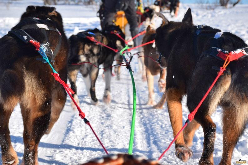 Los perros, los grandes protagonistas de esta experiencia en la Laponia noruega