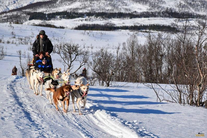 Trineo de perros en la Laponia noruega