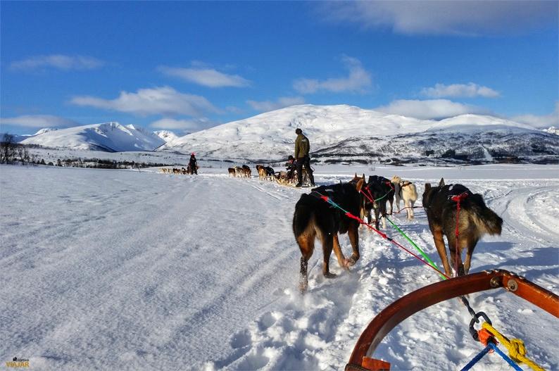 Trineo tirado por perros. Actividades en la Laponia noruega