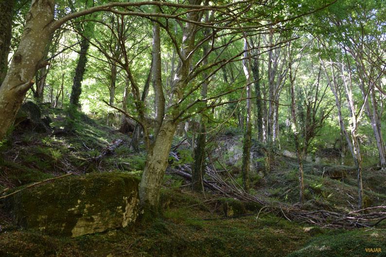 Un bosque en el que perderse. Nacedero del Urederra