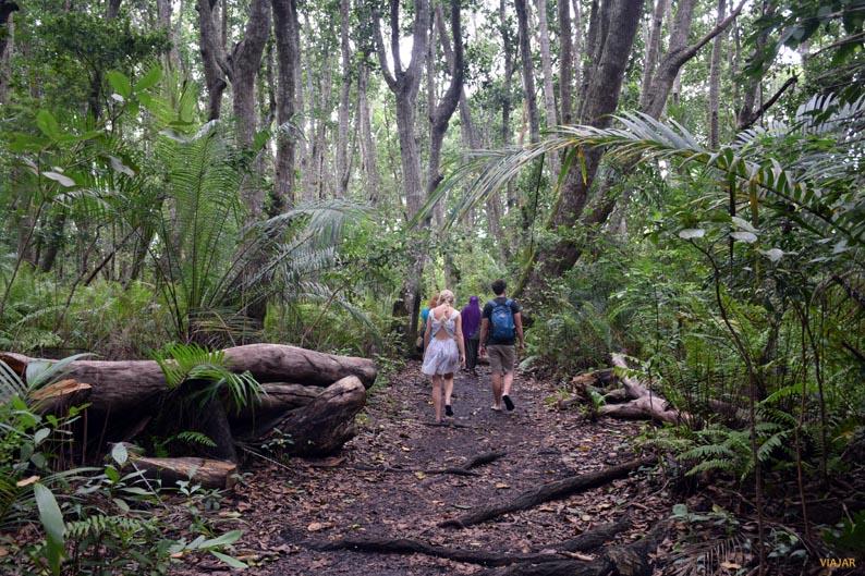 Bosque de Jozani. Zanzibar