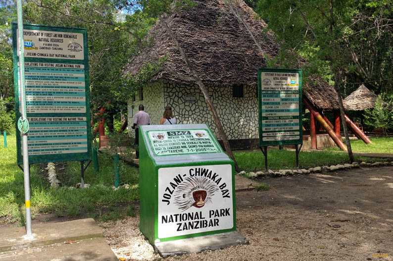 El bosque de Jozani, refugio de los colobos rojos en Zanzíbar ...