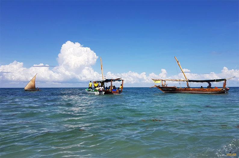 Safari Blue. Excursion en Zanzibar