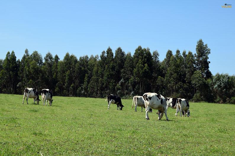 Paisaje rural asturiano. Etapa Gijon/Xixon-Aviles