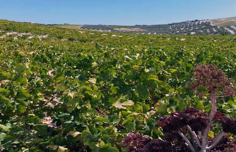 Montilla, tierra de vinos
