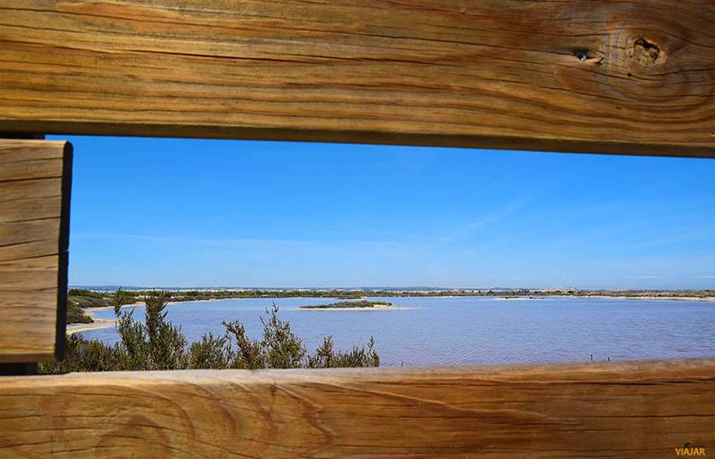 Avistamiento de aves. Que ver en Murcia