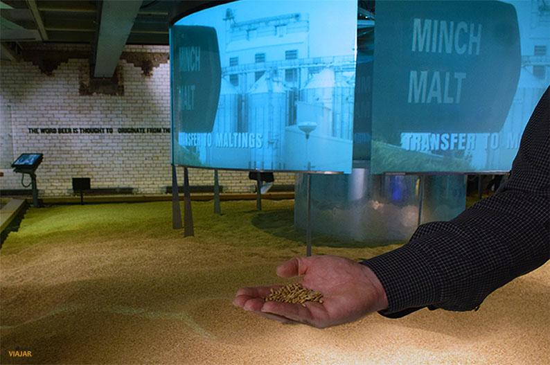 Cebada sembrada en tierra irlandesa. Visitar la Guinness Storehouse