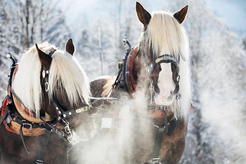 La magia del invierno en Austria © Sebastian Stiphout