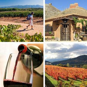 Enoturismo en León: caminando entre viñedos en busca de grandes experiencias
