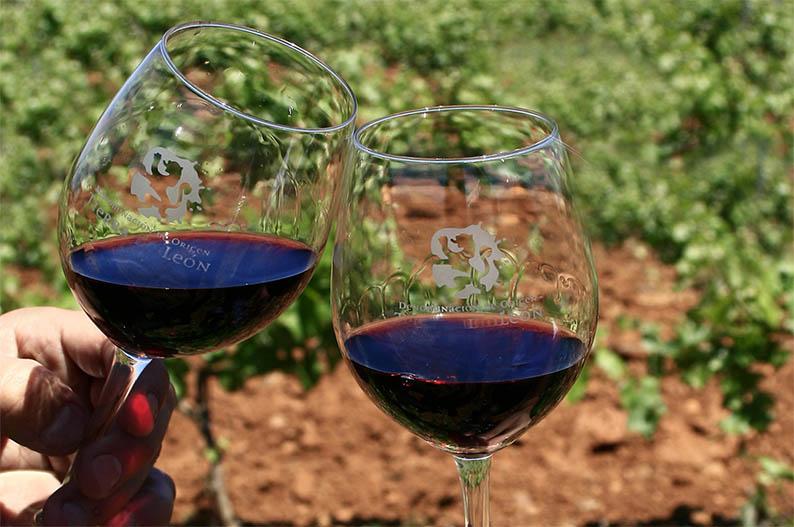 Brindando en el viñedo