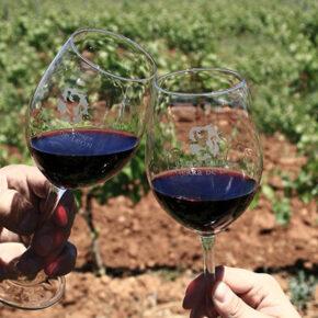 ¡Ponme un León! Descubre los magníficos vinos de la Denominación de Origen León y cómo disfrutarlos