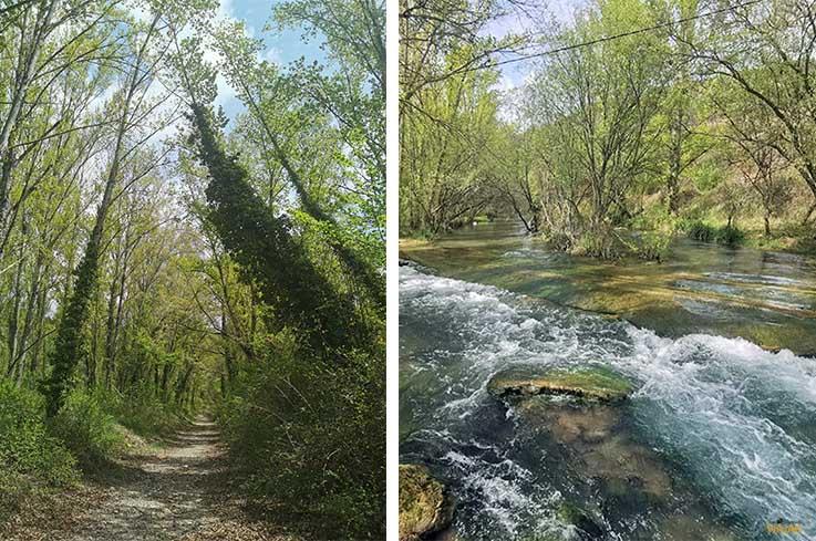 Baño de bosque en Olba
